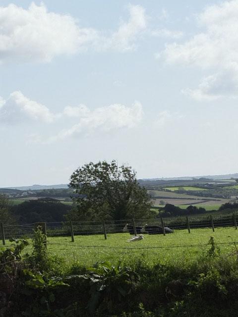 Across Orchard Field - markstonefarm.co.uk