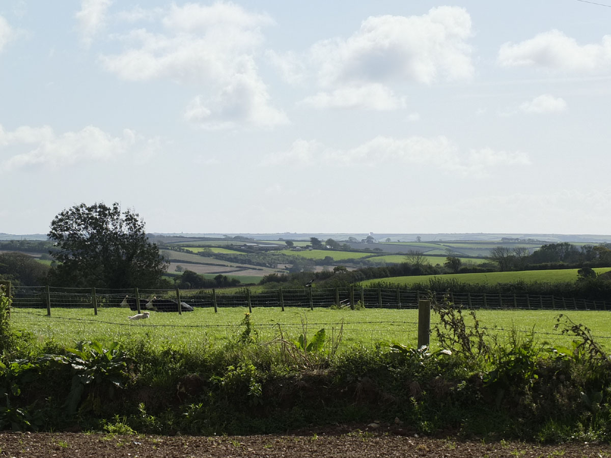 Markstone Stock grazing - markstonefarm.co.uk